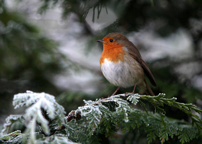 Those hoping for snow on Christmas Day are likely to be disappointed