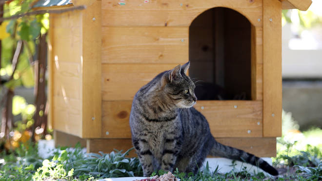 Cats could need vaccines to stop the spread of Covid back to humans