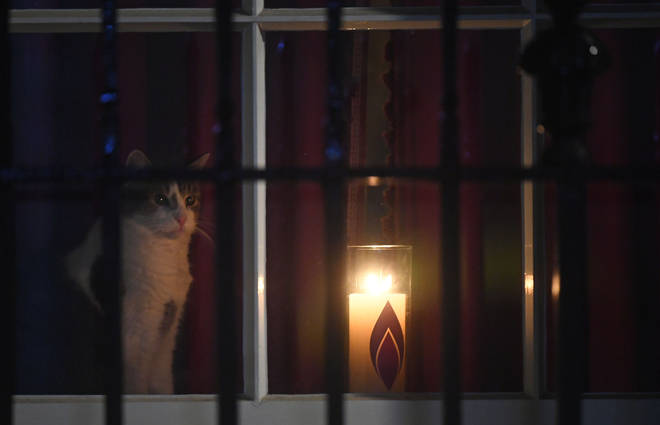 Larry the Cat sits next to a candle in a window at 10 Downing Street, London, lit in remembrance of victims of the Holocaust