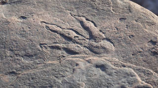 The dinosaur footprint is believed to be 220 million years old