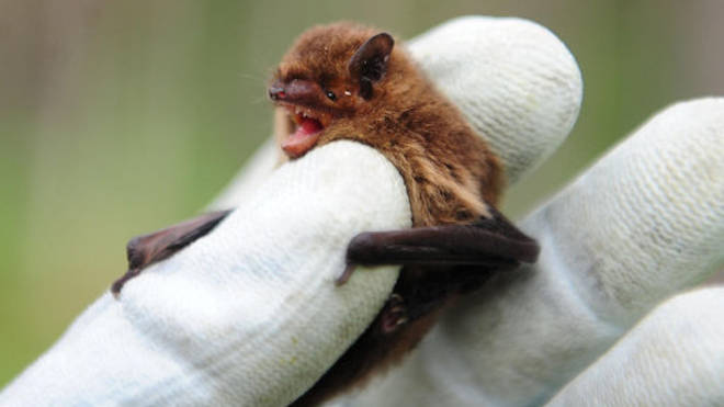 """Climate change may have led to bat """"hotspot"""" in Southern China."""