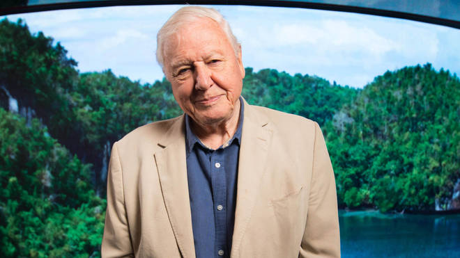 David Attenborough has issued a stark warning about climate change