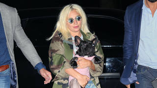 Two of Lady Gaga's French bulldogs have been stolen in a brutal attack