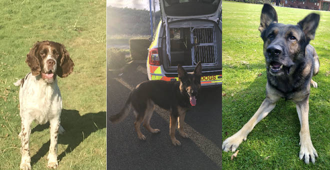 Left to right: GMP police dogs Hugo, Jax and Ted