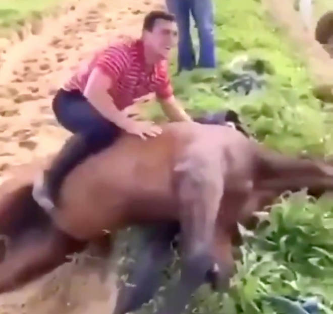 A video of Rob James straddling a dead horse has emerged on social media