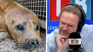 James O'Brien discussed the case of a seal which had to be put down after being attacked by a dog