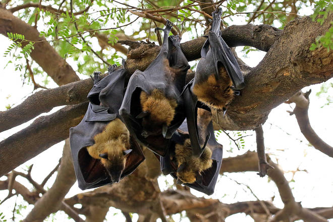Covid-19 was most likely passed to humans from bats via another animal, the draft study found
