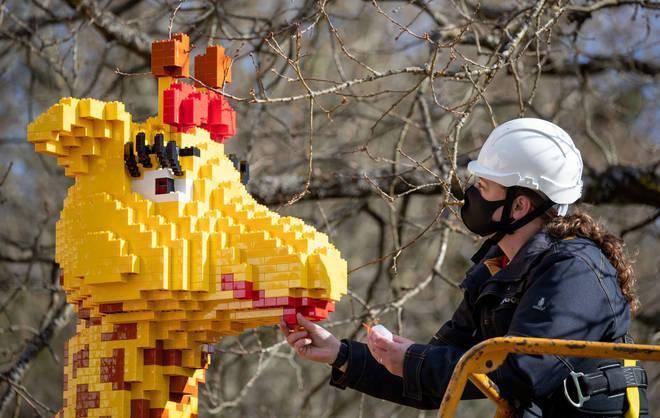 Legoland Model Maker Nicola Parker adds a brick to a model of a Lego giraffe.