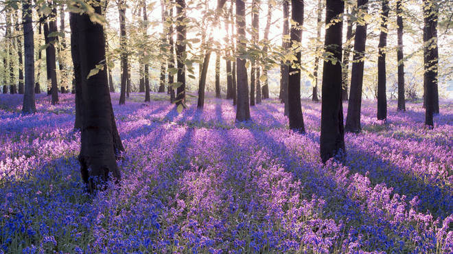 UK woodlands and trees are facing a crisis point due to a barrage of threats