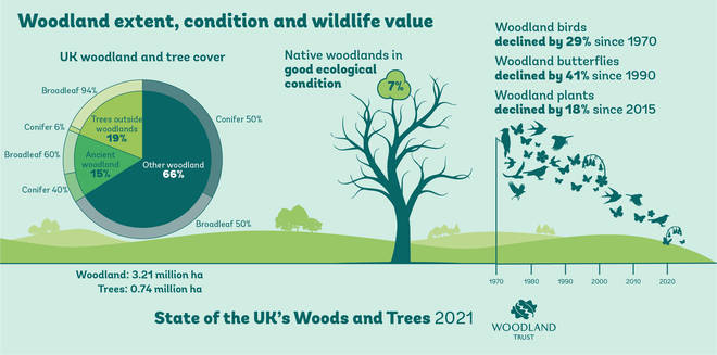 A Woodland Trust infographic showing the benefits of woodlands