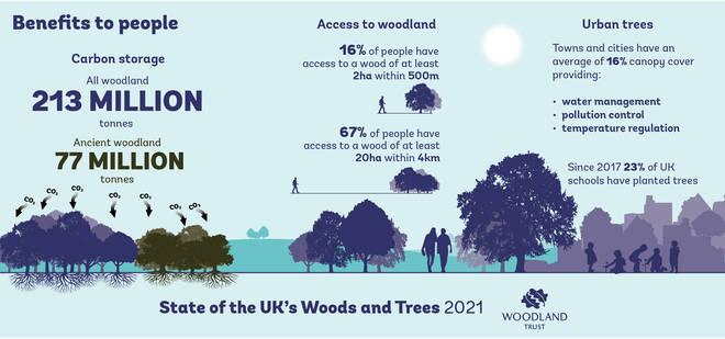 How healthier woodlands will benefit people