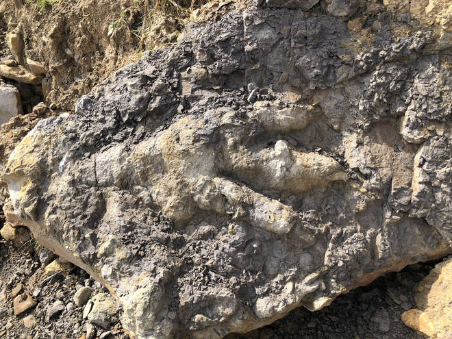 The fossil is the largest dinosaur footprint ever found in Yorkshire