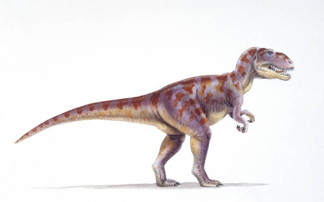 Illustration of a Megalosaurus, which had a similar footprint to the discovery in Yorkshire