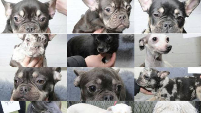 Police hope dozens of dogs can be reunited with their owners