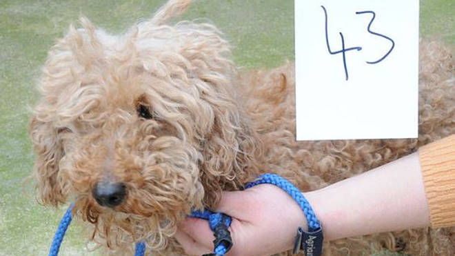 More than 80 dogs need to be reunited with their owner
