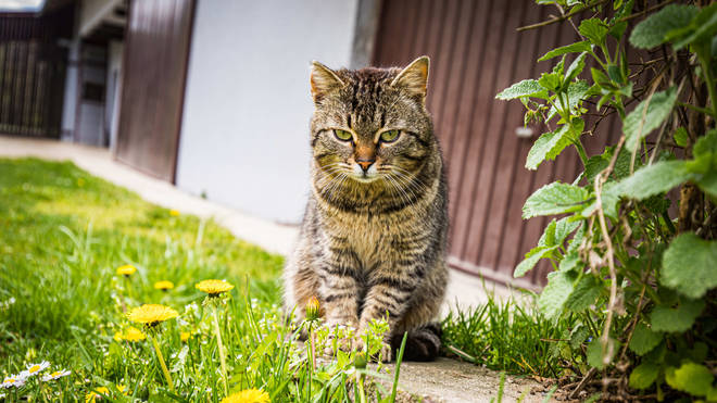Two cases of human-to-cat transmission of Covid-19 have been identified