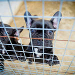 Animals would be recognised as sentient beings under a landmark new law