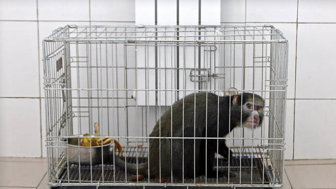 It aims to protect wild animals by making it illegal to keep primates as pets