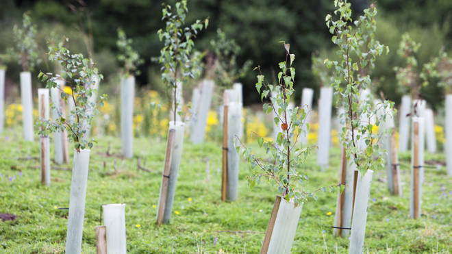 Tree planting will also help the world to achieve net-zero emissions