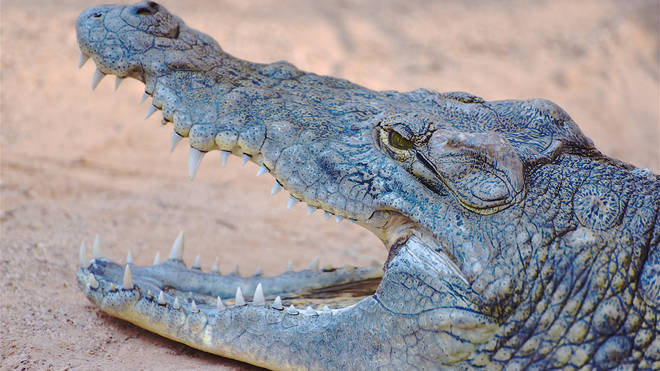 The crocodile attacked Melissa Laurie three times, dragging her under the water.