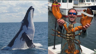 Michael Packard survived after being swallowed by a humpback whale