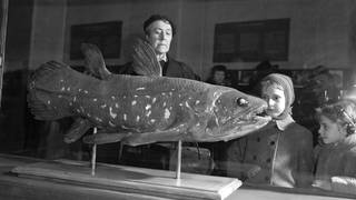 Visitors to the Natural History Museum in Paris look at a coelacanth exhibit