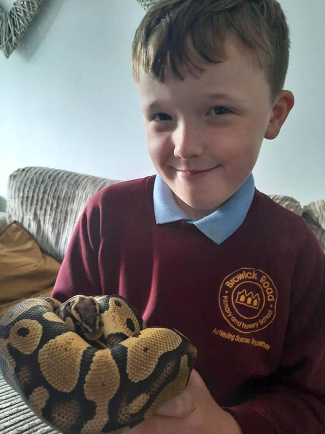 Gav escaped after Ellis accidentally left open the snake tank's door