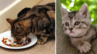 Pancytopenia: Alert for cat owners amid pet food recall - full list