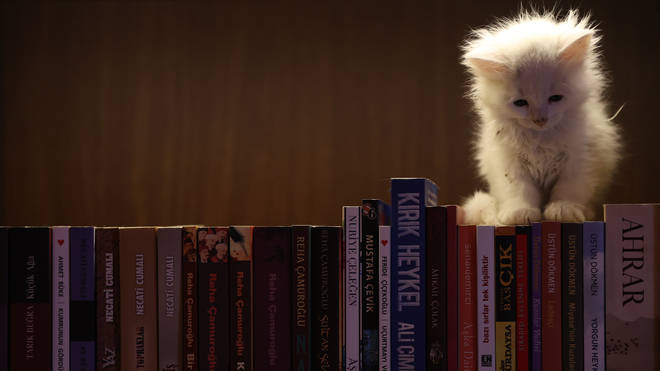 Historic library with cats in Turkey's Bursa