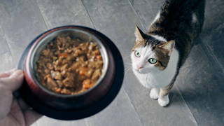 Vets across the UK have treated at least 528 cases of feline pancytopenia
