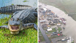 A man has his arm torn off in an alligator attack amid Hurricane Ida