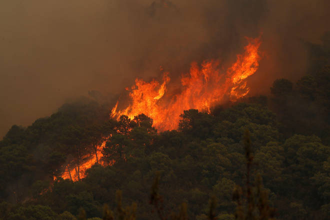 Fires have ripped through acres of forest.