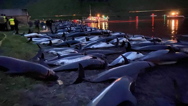 Faeroe Islands Dolphins