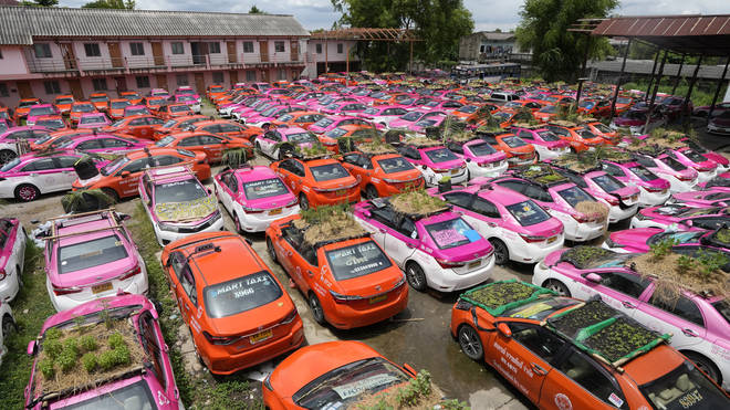 Miniature gardens planted on the roofs of unused taxis in Bangkok