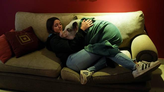 Virus Outbreak Argentina Pets