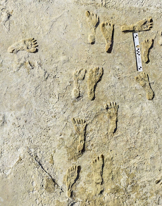 Fossilised human footprints were found at the White Sands National Park in New Mexico