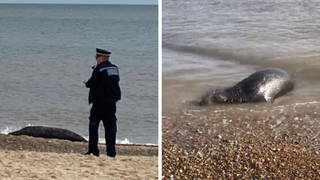 The seal is being protected by police.