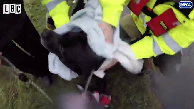 The dog was reunited with his owners