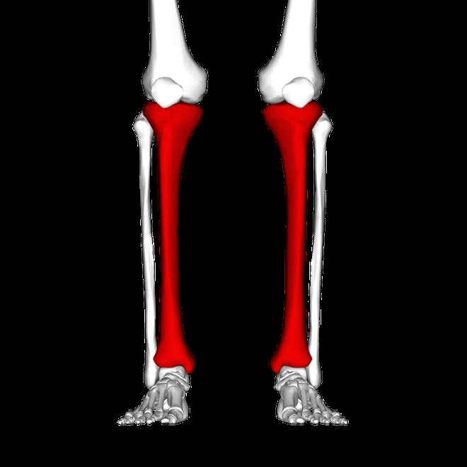 Shin bones