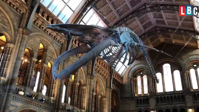 """Hope"" the blue whale has taken centre-stage at the Natural History Museum"