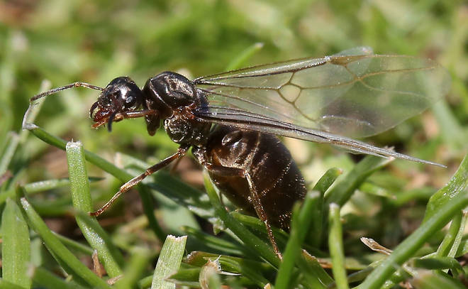 Flying Ant Day tends to occur in warm weather between June - September