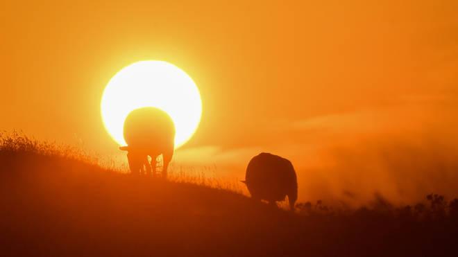 The sun rises over Burton Dassett Hills in Southam, Warwickshire.
