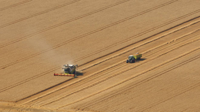Agricultural output has slumped in July