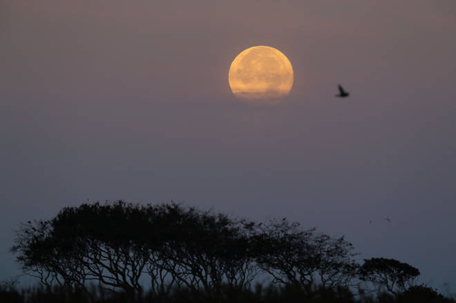 This year's Harvest moon and micromoon will appear in the early hours of Saturday morning