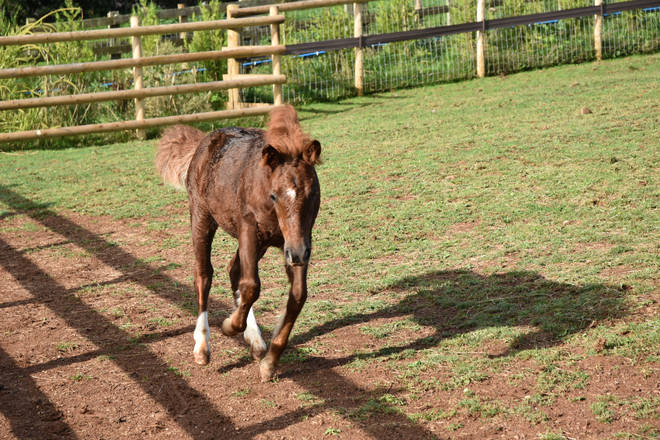 Orphaned Ava was found alone and unwell on Dartmoor