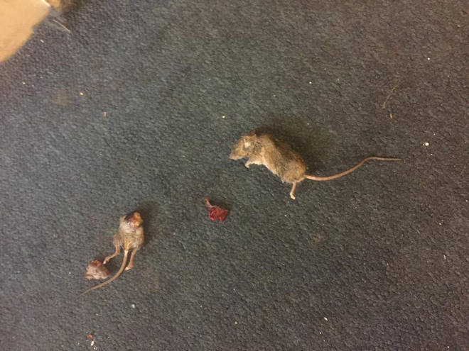 Some of the dead rats on Ms Williams carpet