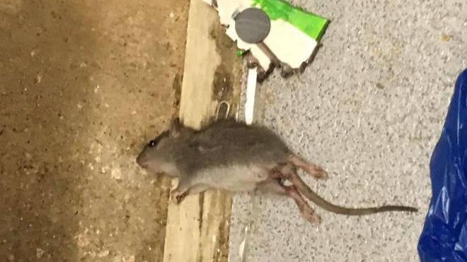 A dead rat in Ms Williams flat