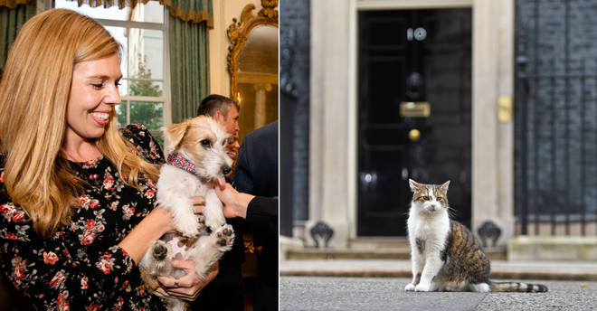 Larry the cat picks on the PM's new dog, the Chancellor revealed