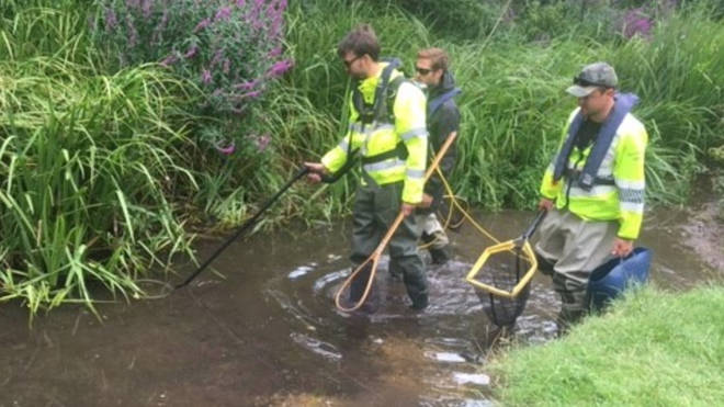 Fish rescue taking place in areas with low dissolved oxygen levels due to drought