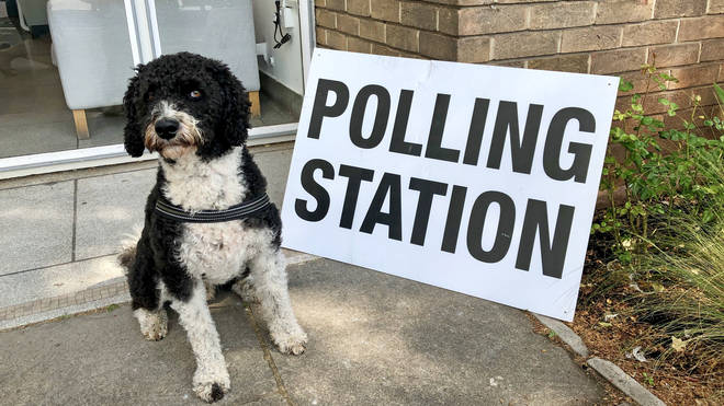 On 12th December, we'll see more Dogs At Polling Stations